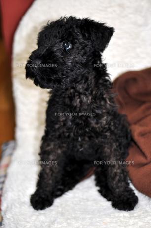 子犬の写真素材 [FYI00076601]