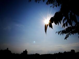 木の葉のシルエットと輝く太陽の写真素材 [FYI00076602]