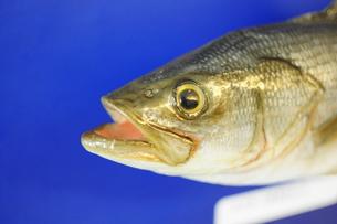 魚の顔の写真素材 [FYI00076614]
