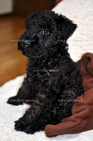 子犬の写真素材 [FYI00076624]