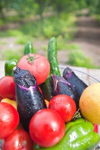 夏野菜の写真素材 [FYI00077595]