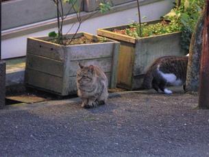野良猫の写真素材 [FYI00078253]