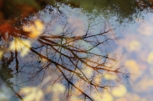 水面の影の写真素材 [FYI00078280]