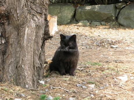 境内の野良猫の写真素材 [FYI00078328]