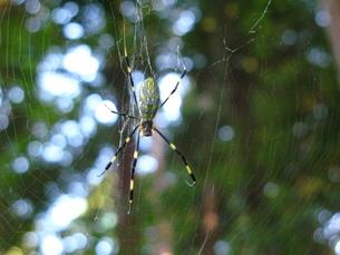蜘蛛の写真素材 [FYI00078341]