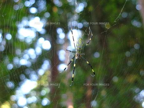 蜘蛛の写真素材 [FYI00078355]