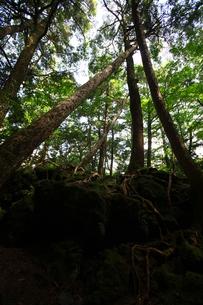 樹海の写真素材 [FYI00079438]