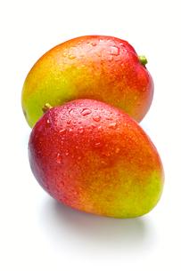 アップルマンゴーの写真素材 [FYI00080024]