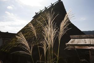 茅葺屋根と逆光のススキの写真素材 [FYI00080181]