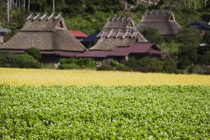 山里の蕎麦畑の写真素材 [FYI00080183]