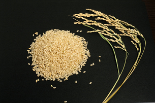 稲穂と玄米の写真素材 [FYI00080190]