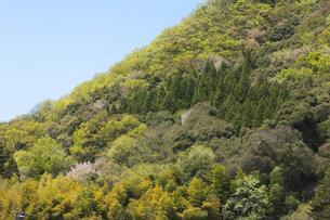 新緑の里山斜面の写真素材 [FYI00080200]