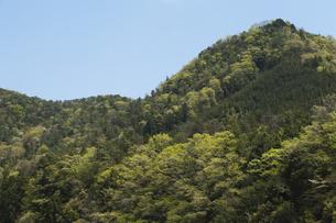 新緑の里山の写真素材 [FYI00080203]