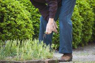 庭の雑草取りの写真素材 [FYI00080209]