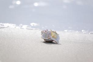 波打ち際の貝殻の写真素材 [FYI00080243]