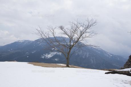 残雪の山城跡の写真素材 [FYI00080291]