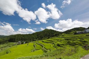 盛夏の長谷の棚田斜面の写真素材 [FYI00080322]
