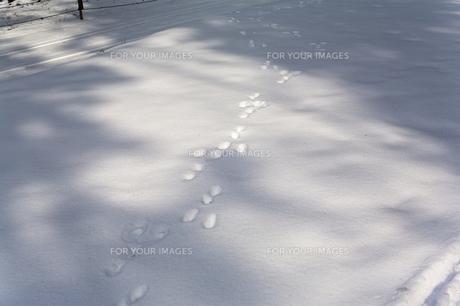 雪上にウサギの足跡の素材 [FYI00080412]