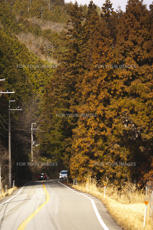 スギの花満開の山道の写真素材 [FYI00080414]
