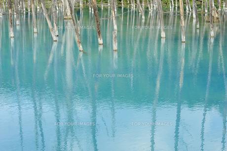 青い池の素材 [FYI00080693]