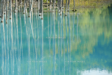 青い池の素材 [FYI00080702]