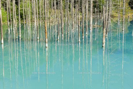 青い池の素材 [FYI00080704]