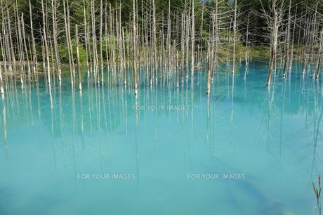 青い池の素材 [FYI00080706]