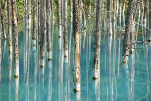青い池の素材 [FYI00080707]
