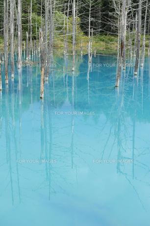 青い池の素材 [FYI00080708]