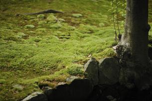 苔の写真素材 [FYI00080991]