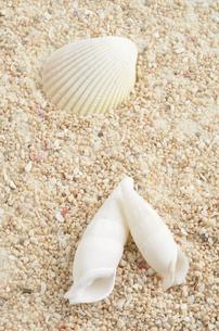 夏の海のイメージの写真素材 [FYI00081449]