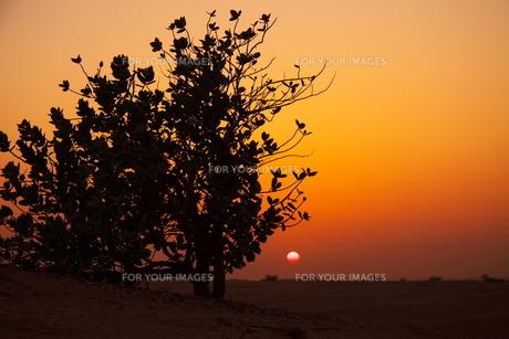 砂漠の夕陽の写真素材 [FYI00081489]