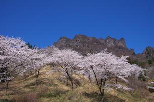 桜咲く妙義山の写真素材 [FYI00081935]
