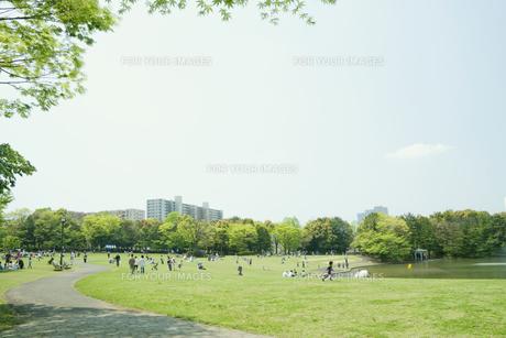 日曜日の公園の写真素材 [FYI00082024]