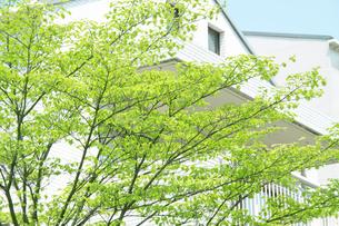 新緑と家の写真素材 [FYI00082031]
