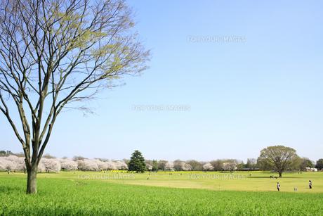 春の昭和記念公園の写真素材 [FYI00082067]