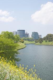 春の皇居周辺の写真素材 [FYI00082090]