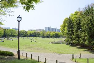 新緑の公園の写真素材 [FYI00082091]