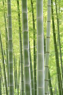 竹と光の写真素材 [FYI00082095]