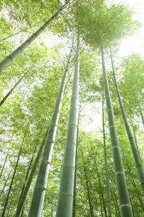 竹林の写真素材 [FYI00082107]