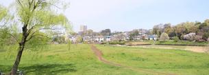 春の武蔵野公園の写真素材 [FYI00082151]
