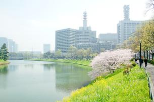 春の皇居周辺の写真素材 [FYI00082255]