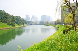 春の皇居周辺の写真素材 [FYI00082257]