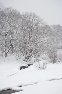 冬の川の写真素材 [FYI00082269]