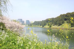 春の皇居周辺の写真素材 [FYI00082272]