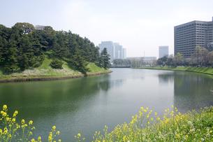 春の皇居周辺の写真素材 [FYI00082274]