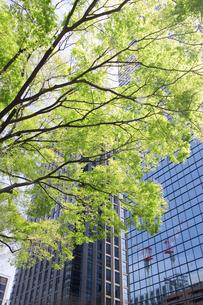 新緑とオフィスビルの写真素材 [FYI00082313]