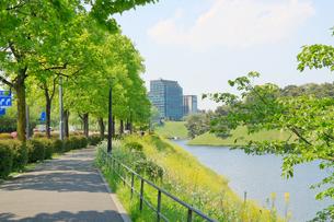 春の皇居周辺の写真素材 [FYI00082317]