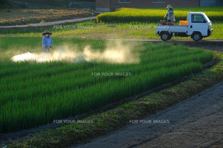 農業の素材 [FYI00082442]