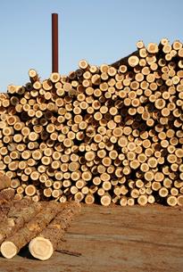 材木の素材 [FYI00082550]